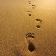 voetstappen
